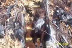 huntingchaddog